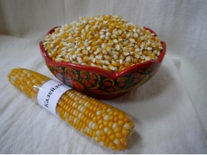 Кукуруза для попкорна «Калейдоскоп»