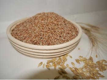 Зерно полбы для проращивания . Фасованное